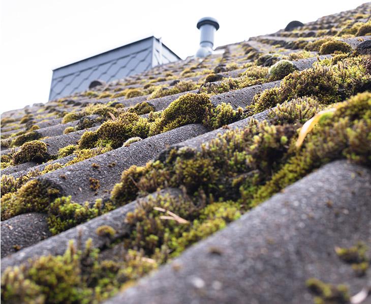 Entretien & Travaux de toiture